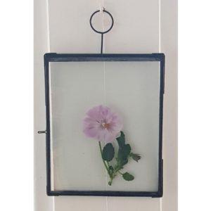 kallaxgardsbutik-glasram-ram-vaxter-blommor-blad-vaxtpress-torkadeblommor-poster-tavelvagg