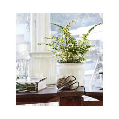 kruka-antik-vit-plåt-krukvaxt-gronvaxt-koket-